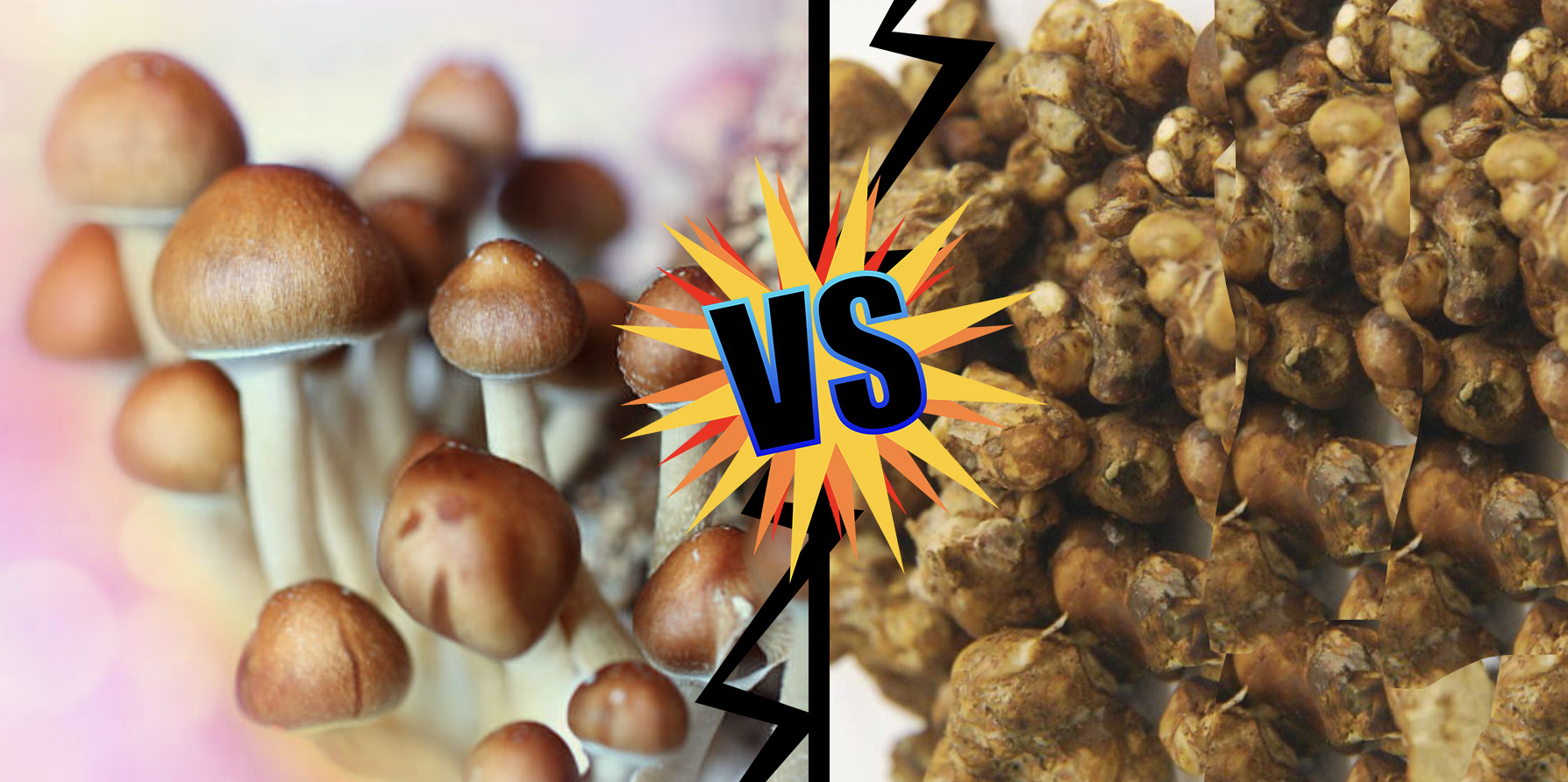 What Is the Difference Between Magic Truffles and Magic Mushrooms?