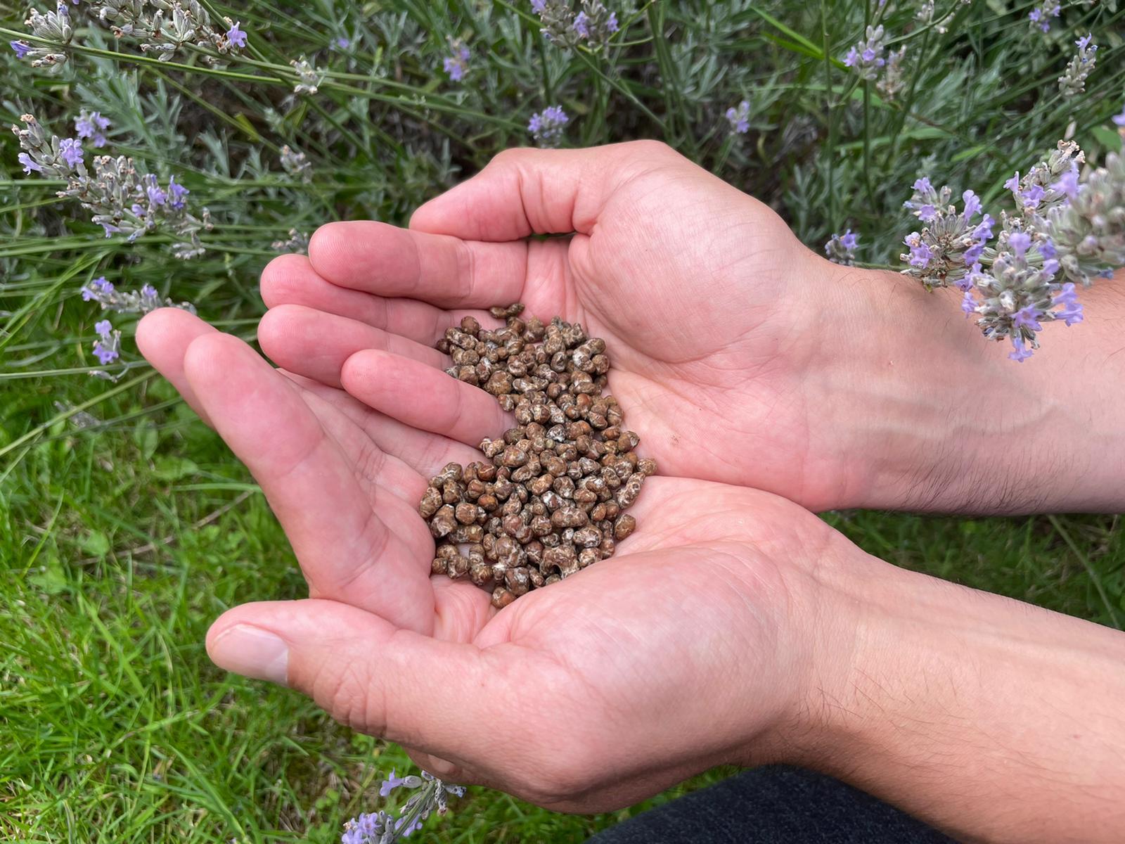 What Are Psilocybin Magic Truffles?